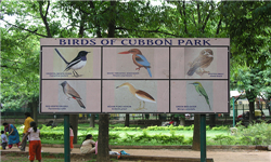 cubbon park bengaluru